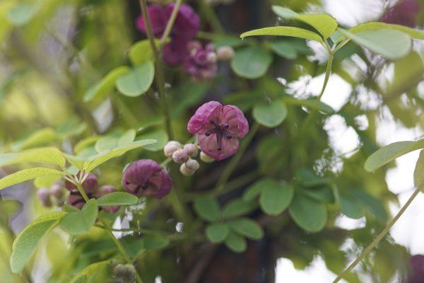 Garden of Sue Steele